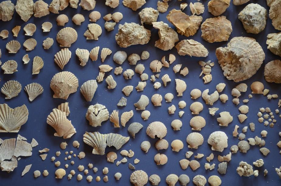 Fósiles del Plioceno