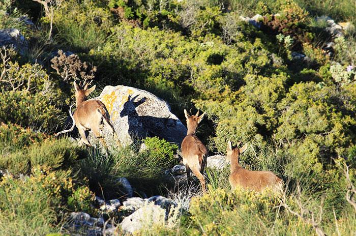 La Sierra de Mijas es un cordón montañoso calizo que discurre paralelo a la costa, conformando un balcón natural sobre el Mediterráneo de gran biodiversidad.